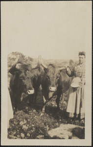 Annie Middlebrook and Two Bulls