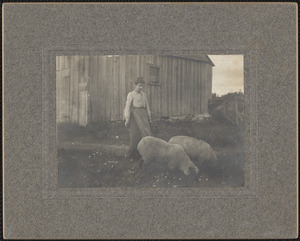 Ann Middlebrook with Sheep