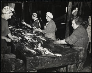 Cleaning + cutting mackerel for canning - New Harbor, Me.