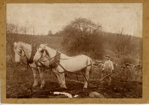 Charles Day plowing on the Seaver Farm