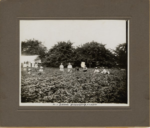 Henry Edson's strawberry pickers