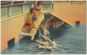 Feeding the porpoises by hand is a daily routine at Marine Studios, world's only oceanarium, Marineland, Florida