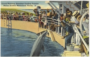 Crowd watching attendant feeding porpoise, Marine Studios, Marineland, Florida