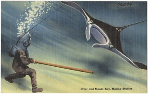 Diver and manta ray, Marine Studios