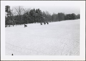 A winter scene of four dark-colored horses and one white horse in a snow-covered field or pasture