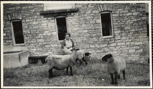 Mother + sheep