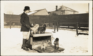 A woman in riding attire stands in a wintry paddock near five small terrier dogs
