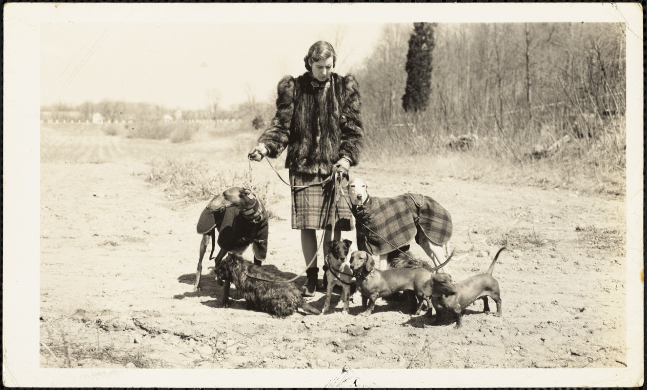 A woman holding the leashes of seven dogs