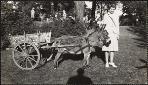 Donkey stallion owned by Mrs. Patton - sire of Dominico II