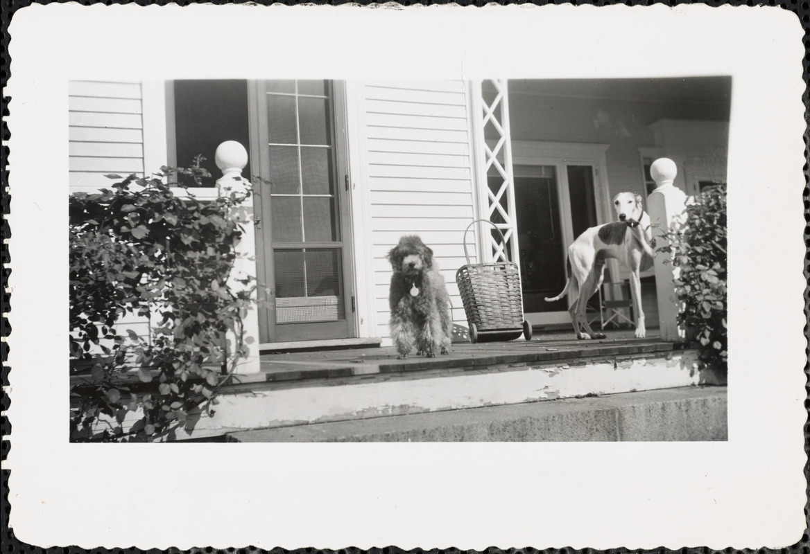 Two dogs on a porch