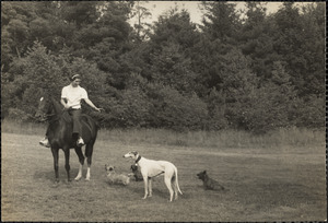 Woman sits astride a well-groomed horse with four dogs nearby