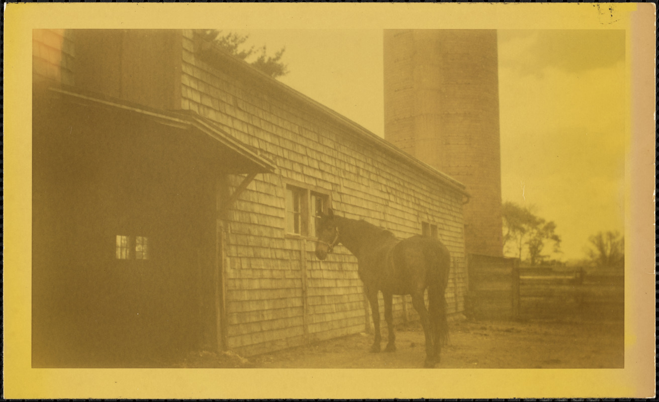 A dark-colored horse wearing a halter stands in a fenced paddock or corral next to a shingled structure