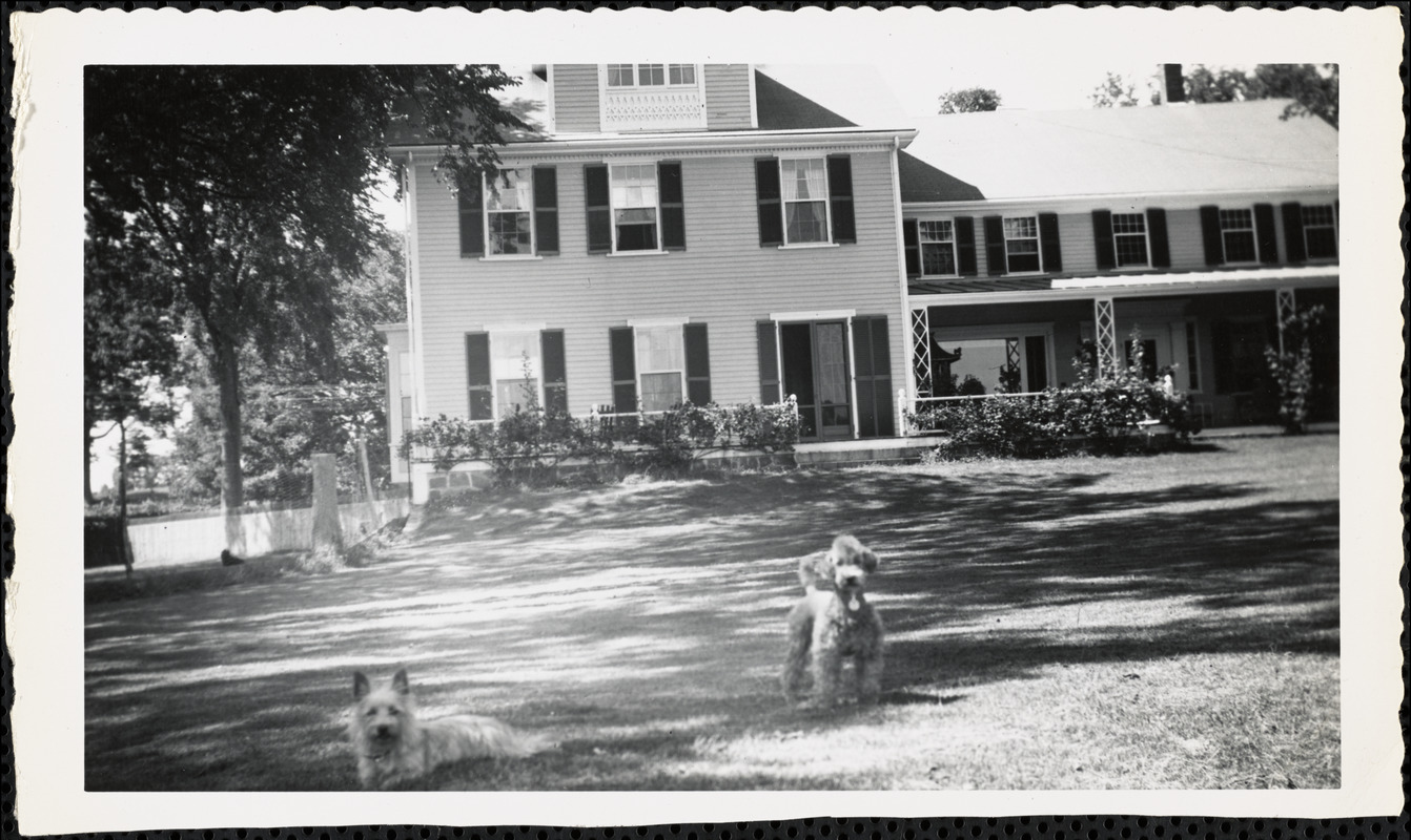 Two dogs stand in front of a large, three-story house