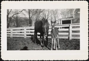 A foal and a larger horse, possibly the foal's mother, stand in a paddock or corral