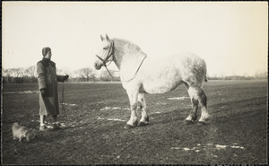 A large, light-colored horse, poses in a broad expanse of wintry field with a woman and a small dog