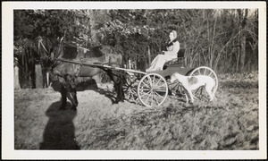 A woman sits in a small, four-wheeled carriage pulled by a dark-colored horse and a greyhound stands nearby