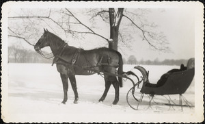A dark-colored horse harnessed to a small sleigh stands on snow-covered ground