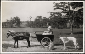 A woman sits in a small, two-wheeled cart pulled by a dark-colored pony with two dogs nearby