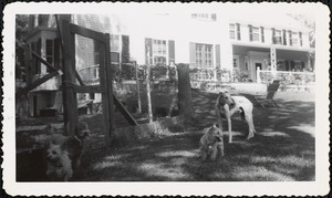 Four dogs pose on a shady lawn next to an area enclosed with posts and what appears to be chicken wire