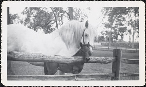 A large, light-colored horse and the mare's dark-colored foal stand next to a split rail fence