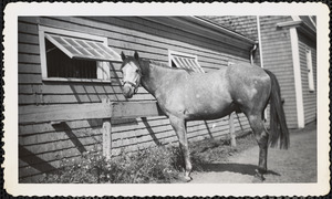 A light-colored horse stands by what appears to be a one-story, shingled structure