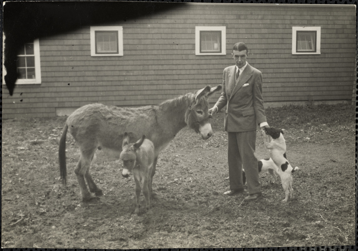 A man stands holding the halter of a donkey and the muzzle of a dog with a second dog and donkey foal nearby