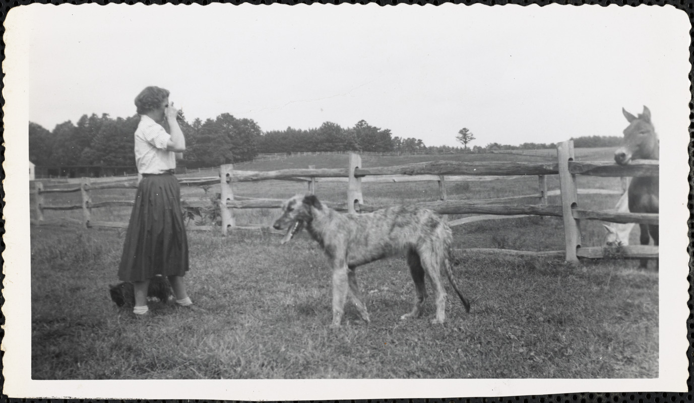 A very large, light-colored dog stands near a woman