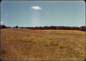 1977 July, show Gt. Pasture, Pigeon Hill & birdsfoot trefoil in bloom.