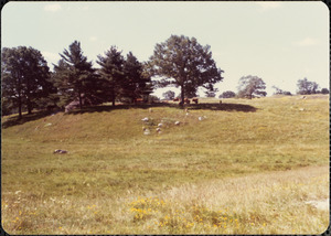 Gt. Pasture, Great Rock, sheep, goats & cattle