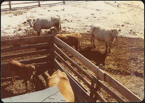 Winter, early March 1977, Appleton Farms