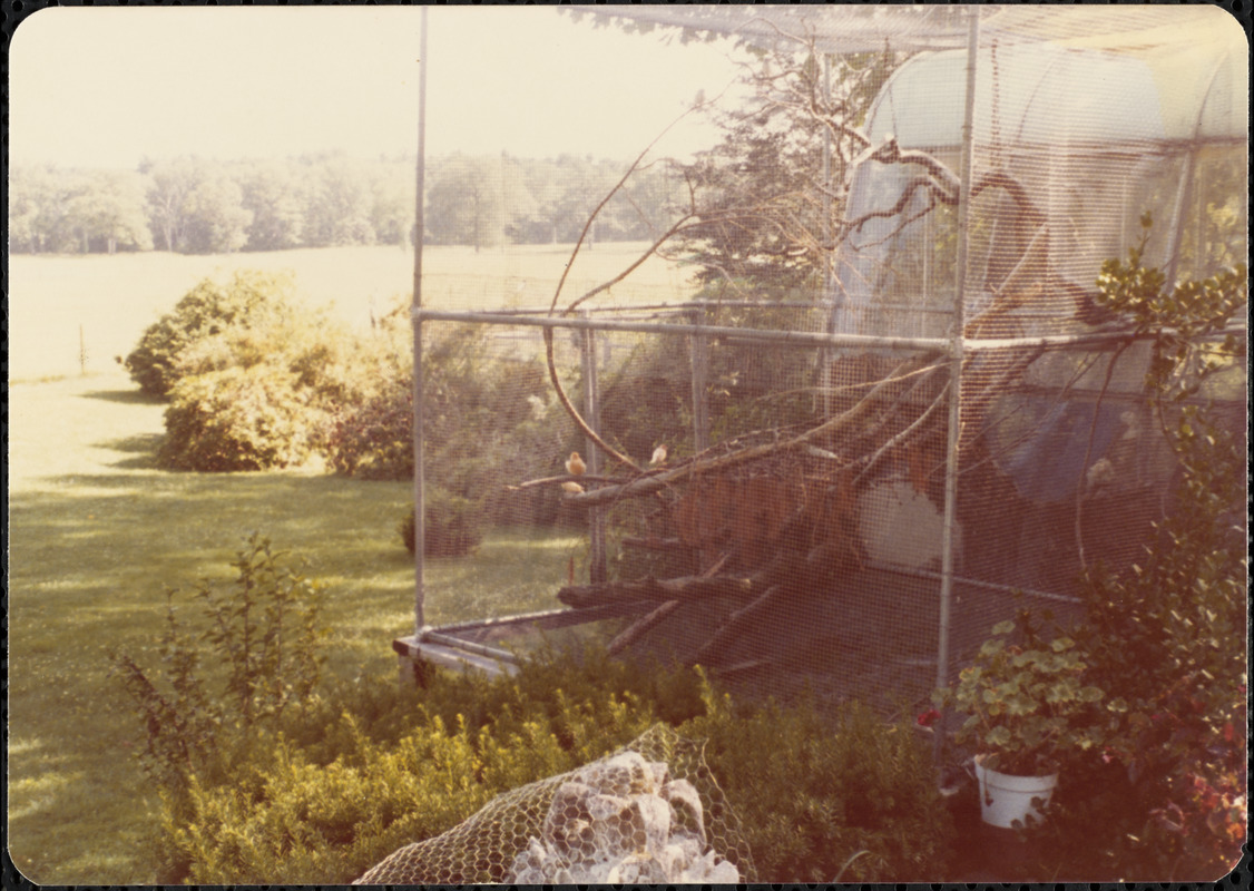 Large outdoor cage inside of which are birds sitting on tree limbs