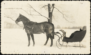 Winter scene with horse harnessed to sleigh and snow covering ground