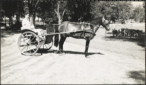 Woman  in a two-wheeled cart or chaise holding the reins of the horse harnessed to it