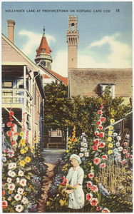 Hollyhock Lane at Provincetown on historic Cape Cod