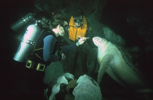 SCUBA divers feed sea turtle at New England Aquarium, Boston