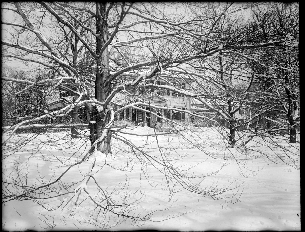 Loring-Greenough House with large tree at center