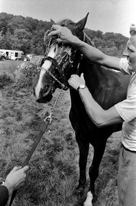 Caring for horses at riding meet, Dedham
