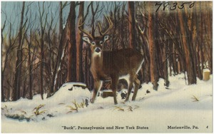 """Buck"", Pennsylvania and New York states, Marienville, Pa."