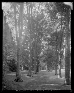 Groton Place: trees in landscape