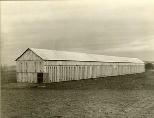 Tobacco Crop, Hadley, Mass. Largest barn in the valley