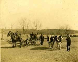 Farm workers with oxen at the Ward estate, Shrewsbury, Massachusetts, circa 1890.