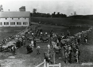 Sibley Farms Cattle Show