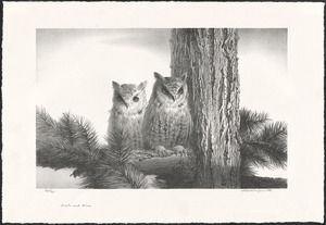 Owls and pine