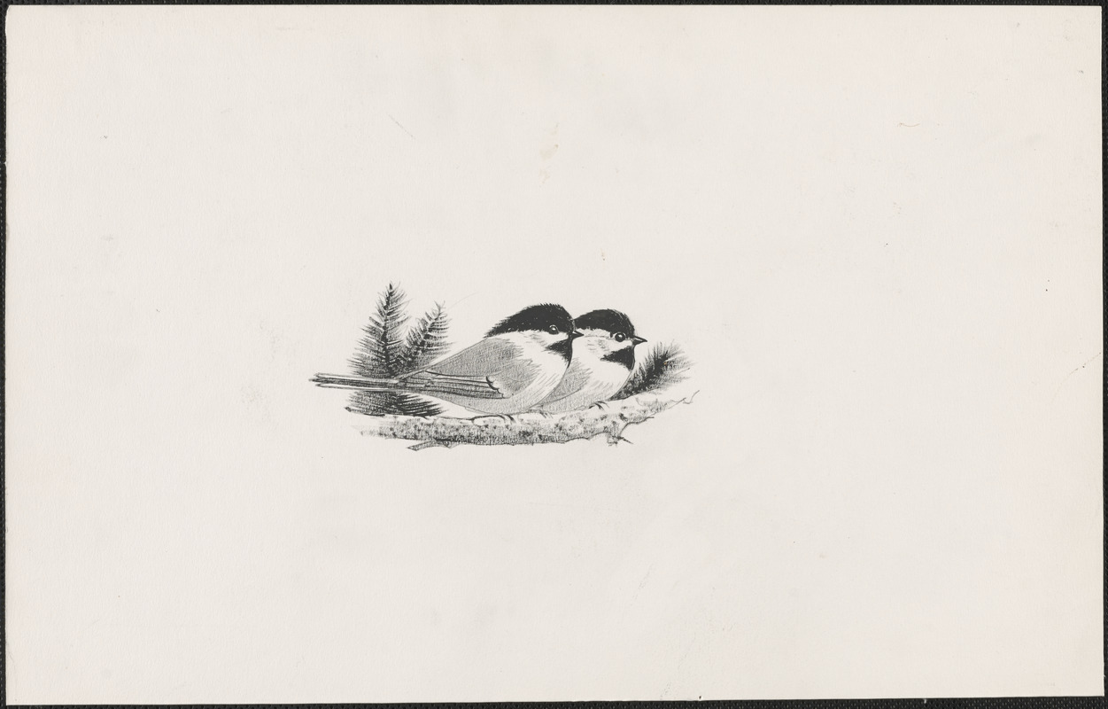 Two small birds on a bough