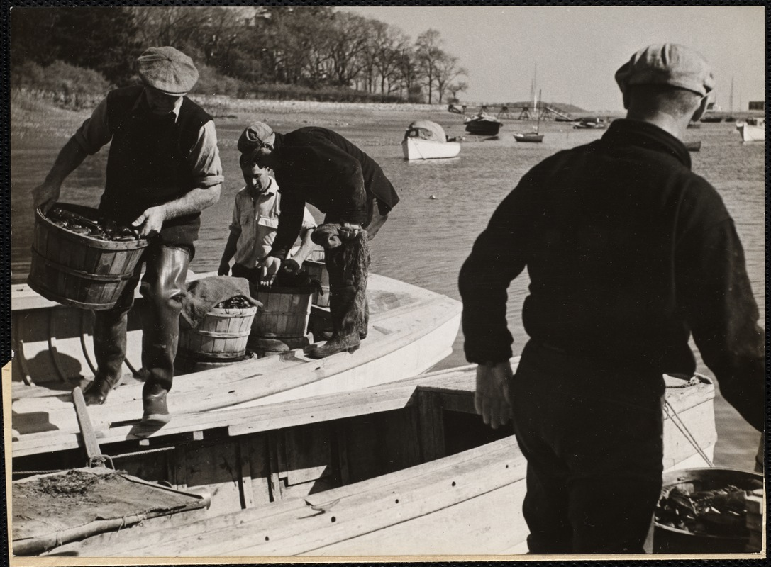 Bringing in the day's haul. A lobster crew unload the sorted lobsters in Cohasset Harbor, less than a mile from Hugo's.