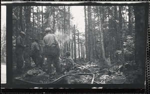 Men working in forest
