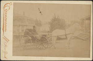 Man driving a horse and buggy