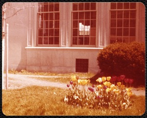 Newton Free Library, Newton, MA. Staff & trustees. Tulips outside Centre St.