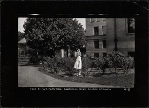 Schools & colleges. Newton, MA. Classical High School plantings