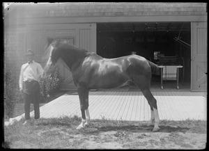 Horse and handler. Possibly Mrs. Skeel's barn, 7 Gates